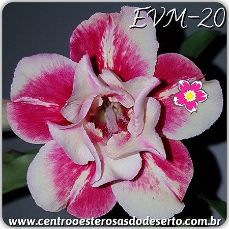 Muda de Enxerto - EVM-020 - Flor Dobrada