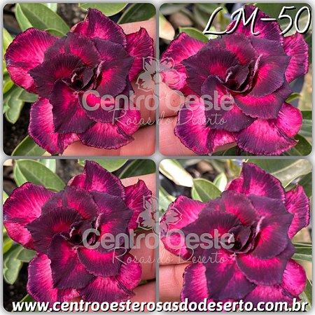 Muda de Enxerto - LM-50 - Flor Tripla