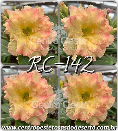Muda de Enxerto - RC-142 - Flor Tripla