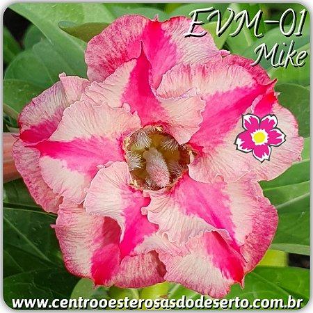 Muda de Enxerto - EVM-001 - Mike - Flor Dobrada