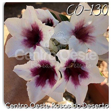 Rosa do Deserto Muda de Enxerto - CO-130 - Flor Simples