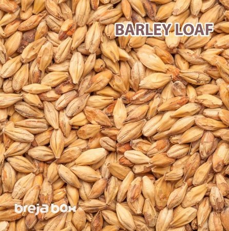 Malte Barley Loaf (Aromatic) Blumenau | 25-30 EBC Breja Box
