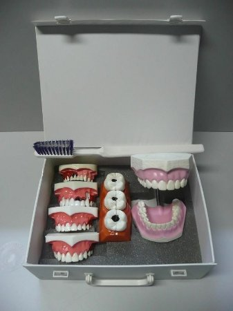 Kit de Macro Modelos de Manequins Odontológicos (Maleta)
