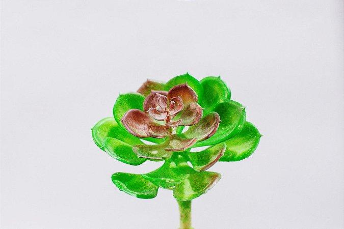 Suculenta artificial folha aberta vermelha