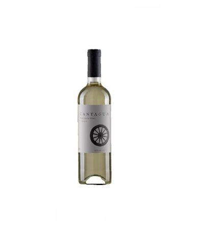 Vinho Branco Chileno Cantagua Clássico Sauvignon Blanc 750 ml