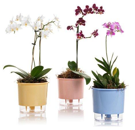 Conjunto 3 Vasos Autoirrigáveis Grandes Lisos (Rosê, Azul, Amarelo)
