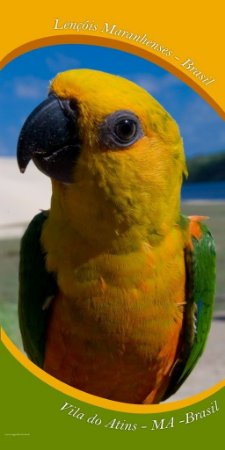 Papagaio 70x140 cm