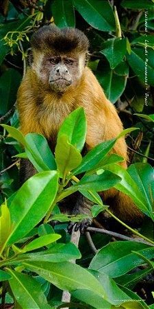 Macaco Prego 70x140 cm