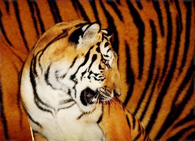 Tigre 100x140 cm