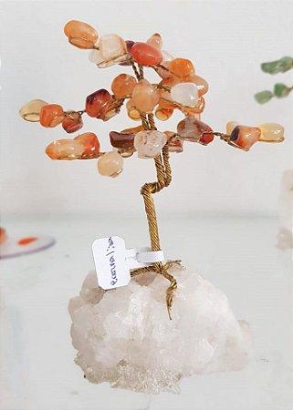 Árvore da Felicidade - cornalina