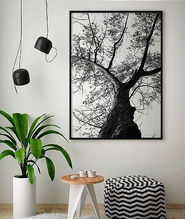 Quadro Poster Decorativo Foto Preto e Branco Árvore Casuarina