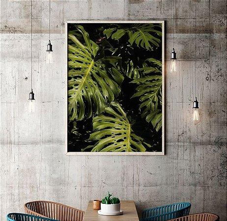 Quadro Poster Decorativo Foto Folhas Costela de Adão - Planta, Folhagem, Verde
