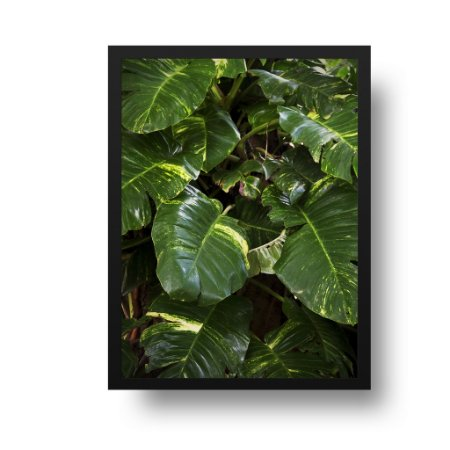 Quadro Decorativo Poster Foto Natureza Planta Jiboia - Folhas, Folhagem, Verde