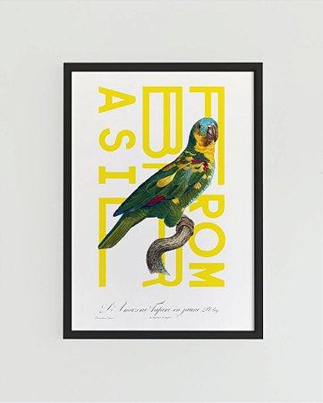 Quadro Decorativo Poster Alma da City Periquito From Brasil - Natureza, Tropical, Gravura