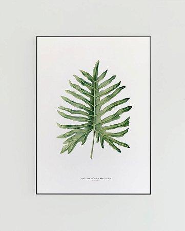 Quadro Decorativo Poster Philodendron, Guaimbê - Flowersjuls, Aquarela