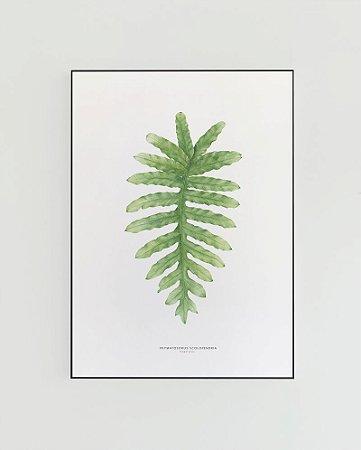 Quadro Decorativo Poster Phymatosoros, Samambaia - Flowersjuls, Aquarela