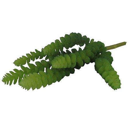 Suculenta Crassula Verde  W298-64