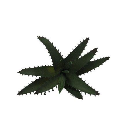 Suculenta Aloe Vera