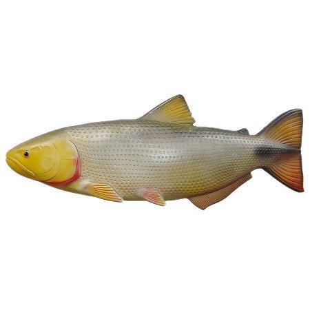 Peixe Dourado de Parede