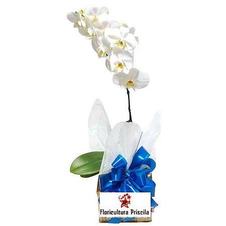 Orquídea Branca Para Ele