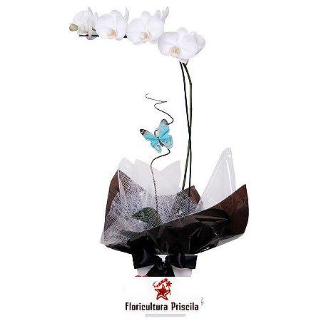 Orquídea Branca Black Tie