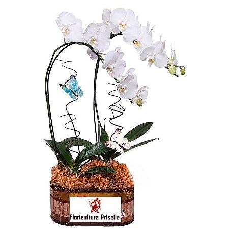 Orquídea Branca Dupla