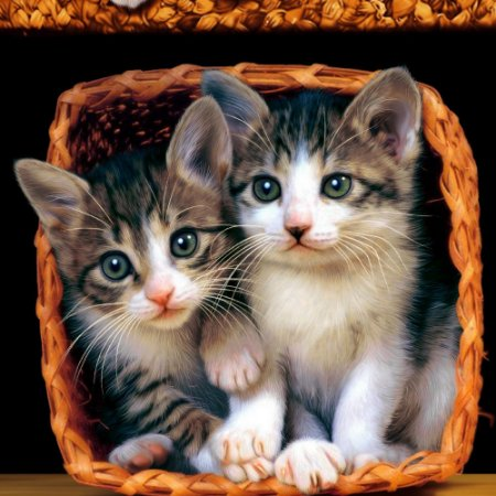 ad99932f2eec toalha-de-praia-veludo-beach-collection-cat-buettner - Casa da Kite