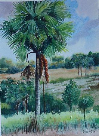 Pintura Original Em Aquarela - Buriti 37x27 cm - Tela/Quadro Para Decoração Da Sua Casa