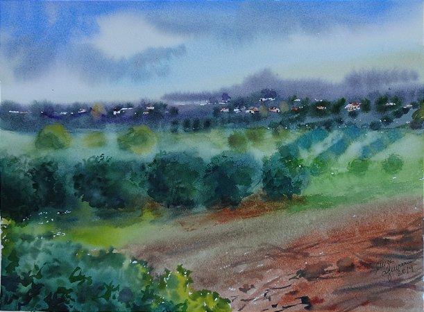 Pintura Original Em Aquarela Oliveiras Na Toscana 37x27cm - Tela/Quadro Para Decoração Da Sua Casa