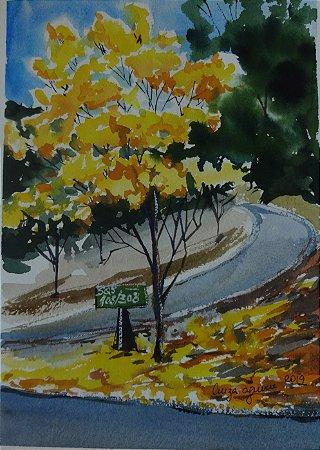 Pintura Original Em Aquarela Ipê Amarelo Na Superquadra 27x19cm - Tela/Quadro Para Decoração Da Sua Casa