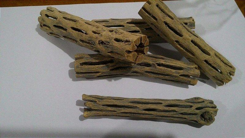 Cholla Cactus Camarão Ornamento Tronco 10cm x 1,5cm UN