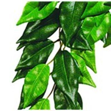 Planta Ficus Small  Exo Terra