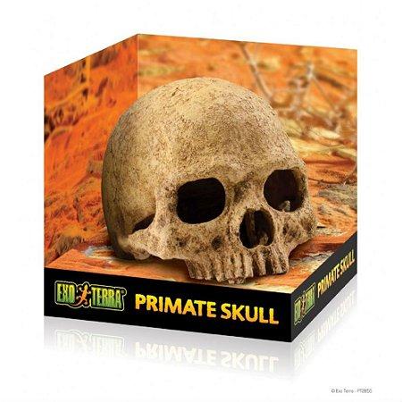 Toca Decoração Exo Terra Primate Skull