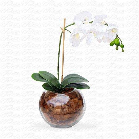 Orquidea Phaleanopsis no Vaso de Vidro Grande