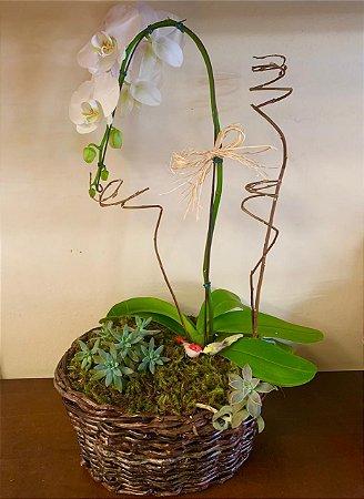 Orquídea Pendente com Suculenta