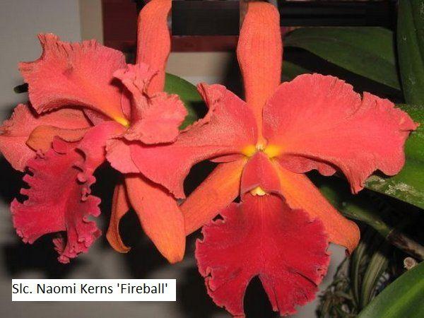 Slc. Naomi Kerns 'Fireball' - Tamanho 3