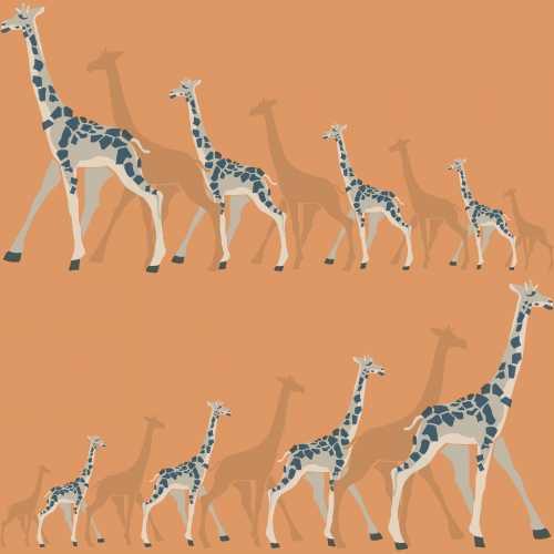 Papel de Parede Dwell Studio Baby Kids DW2363 Girafas