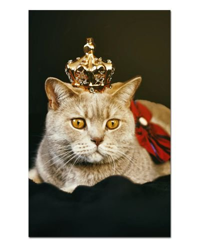 Ímã Decorativo Gato Inglês - Pet Cat - IGAT20