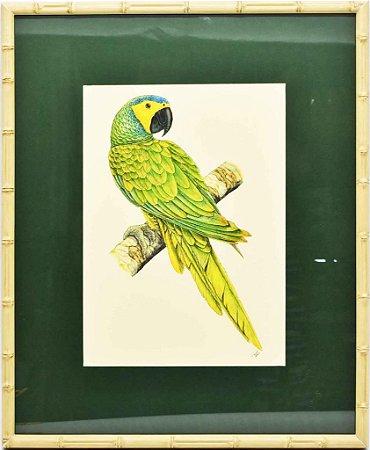 Quadro de Pássaro 7 com Passpatour verde e faux bamboo