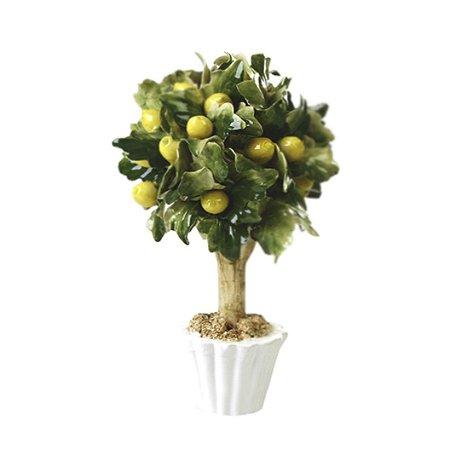 Árvore Limão Siciliano
