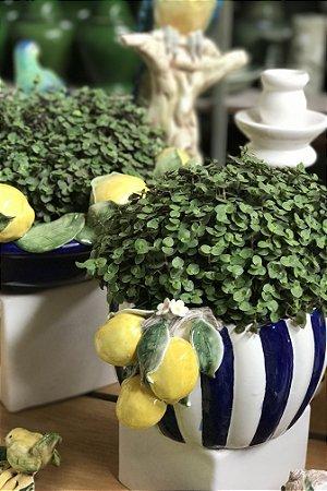 Cachepot Limão Siciliano Listado