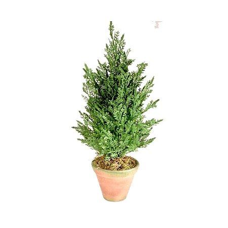 Topiaria Árvore de Natal