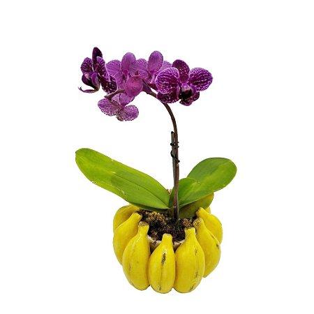 Cachepot Cacho Bananas Zanatta Casa
