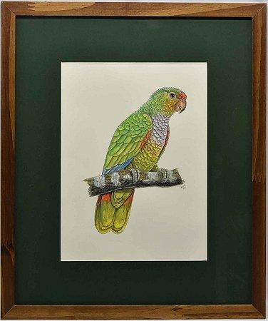Quadro de Pássaro 3 com Passpatour verde