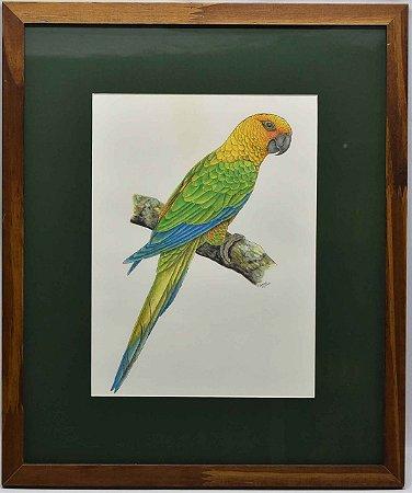 Quadro de Pássaro 4 com passpatour verde