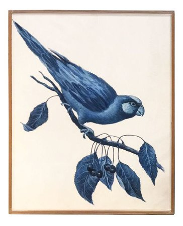 Quadro a óleo pássaro azul 3 Zanatta Casa