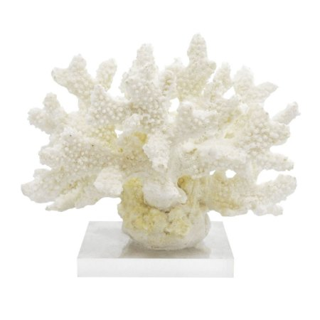 Coral  branco m