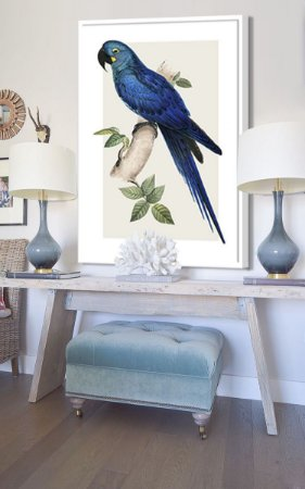 Gravura arara azul 90 x 1,35 cm