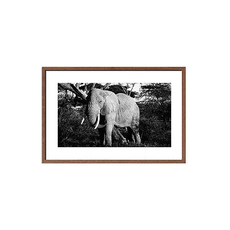Quadro foto elefante preto e branco