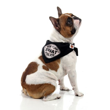 Bandana Policial (SWAT) - Pet - Sulamericana